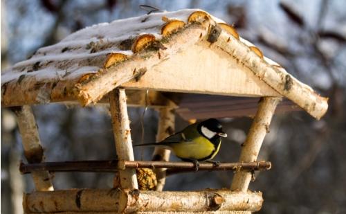 ptak-w-karmniku